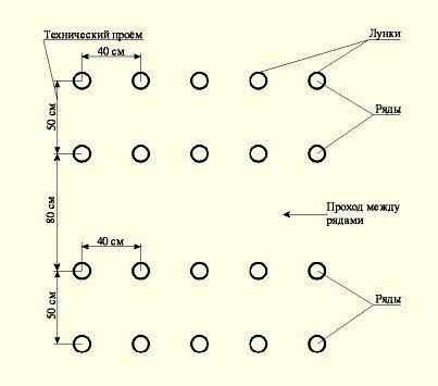 Схема расположения рассады в теплице.