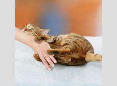 Как заживить руки от кошачьих царапин?