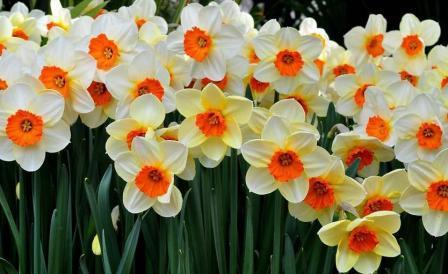С какой примерной скоростью шагает весна: верный ответ