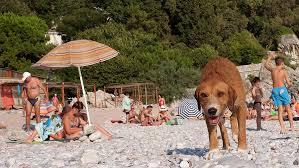 Правила пользования пляжами