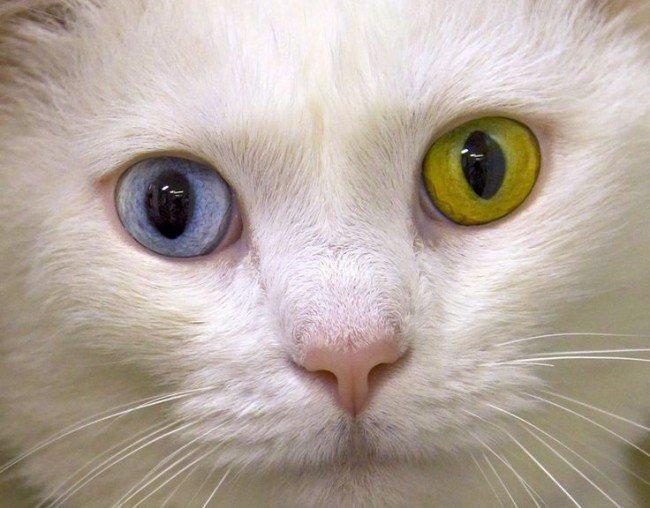почему у людей бывает разный цвет глаз