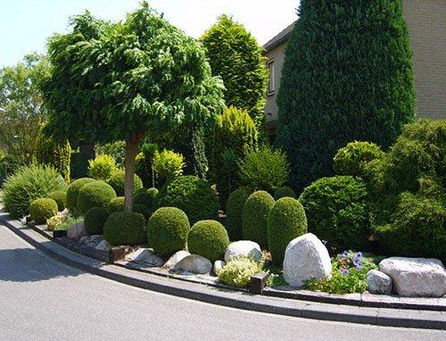 Что за растение Cамшит и что известно?