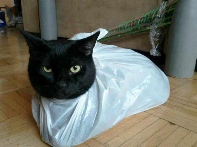 пакет и кошка