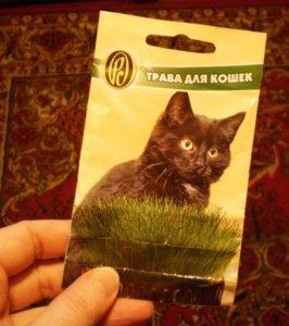 Кошачью траву можно купить в зоомагазине.