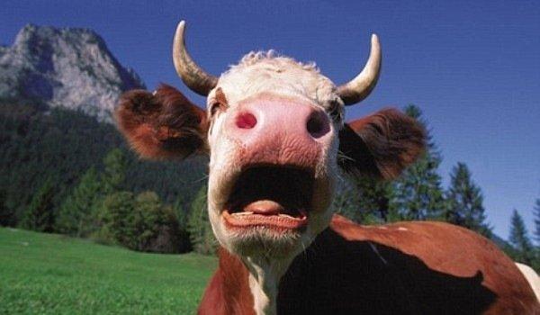 """Что означает выражение """"чья бы корова мычала"""""""