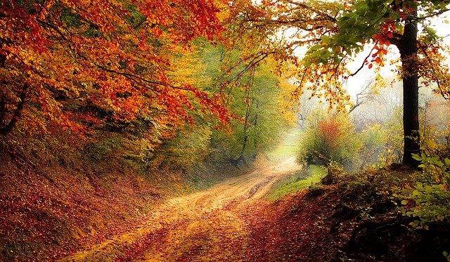 осень и краски