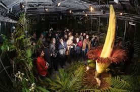 самый большой в мире цветок