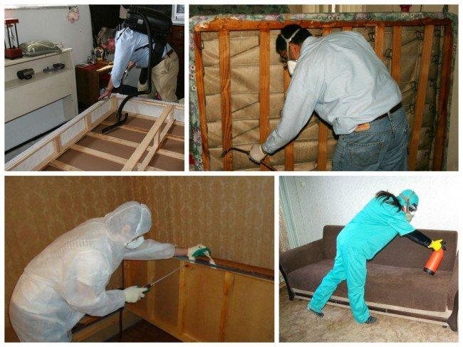Вывести мебельных клопов в домашних условиях
