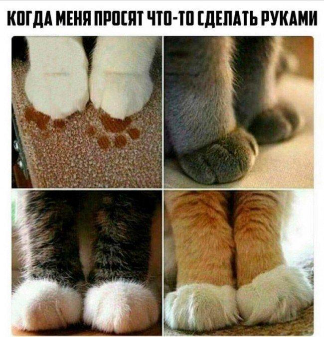 Лапки и кошка
