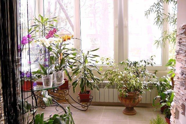 Дизайн цветов для квартиры