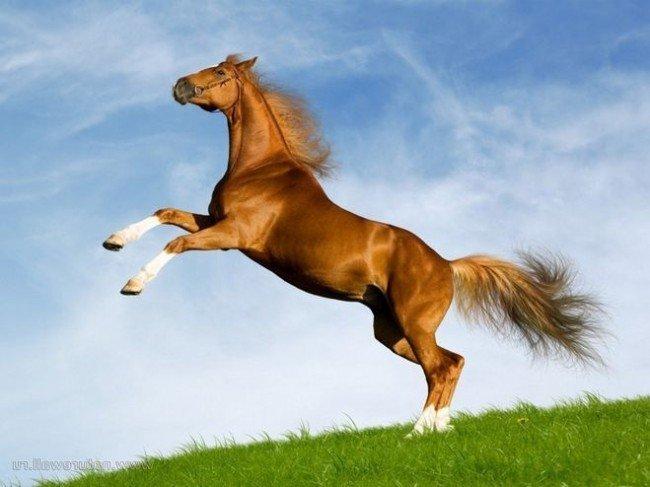 Сколько живут лошади и что влияет на продолжительность?