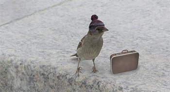 """Что значит выражение """"На птичьих правах"""" ?"""