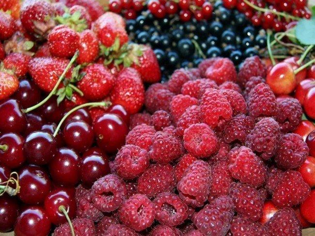 садовые ягоды, вишня и малина, не уживаются вместе