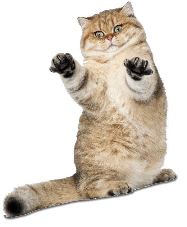 Кот агрессор