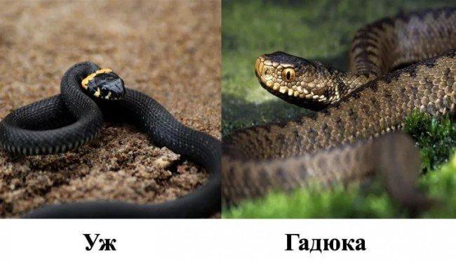 змея: признаки и отличия