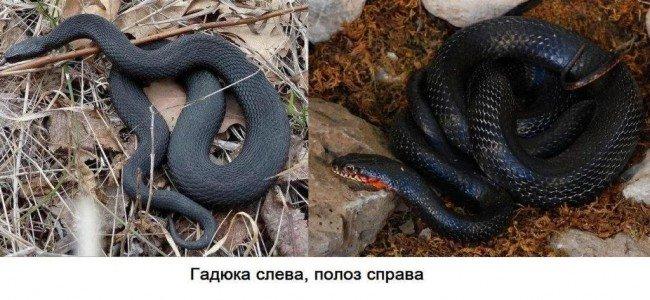 змея - в чем отличия