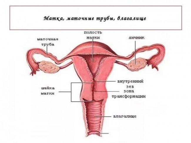 медицина, женские болезни