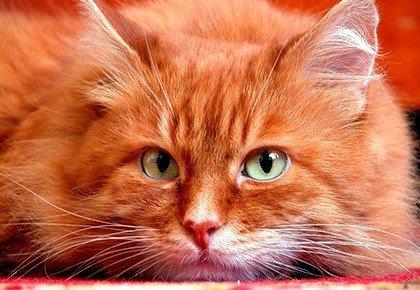 Рыжий кот и кличка