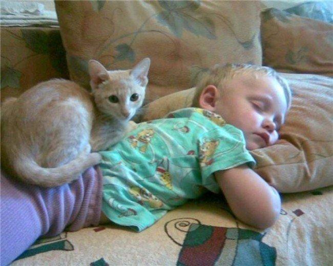 коты лечат людей