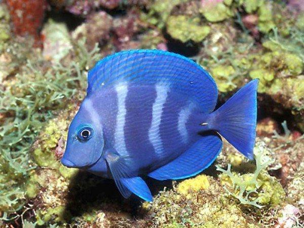 рыба для кормящей