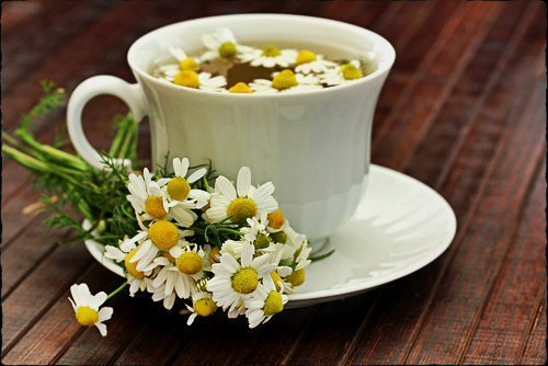 ромашка аптечная для чая