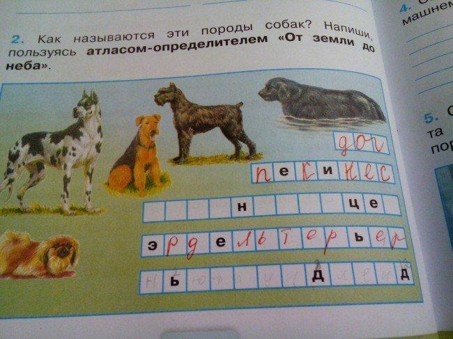 Как называются эти породы собак?