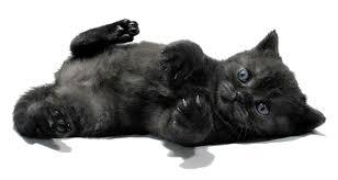 котенок беспородный