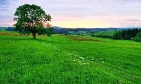 Травянстая равнина