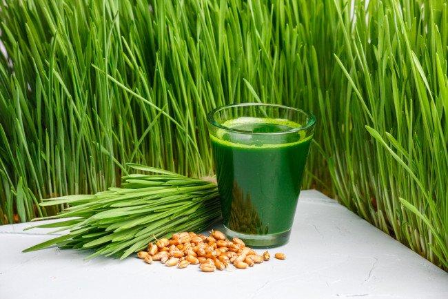 трава пророщенной пшеницы