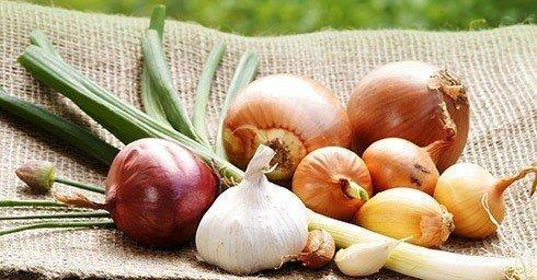 Какие горькие, продукты с лечебным эффектом необходимы?